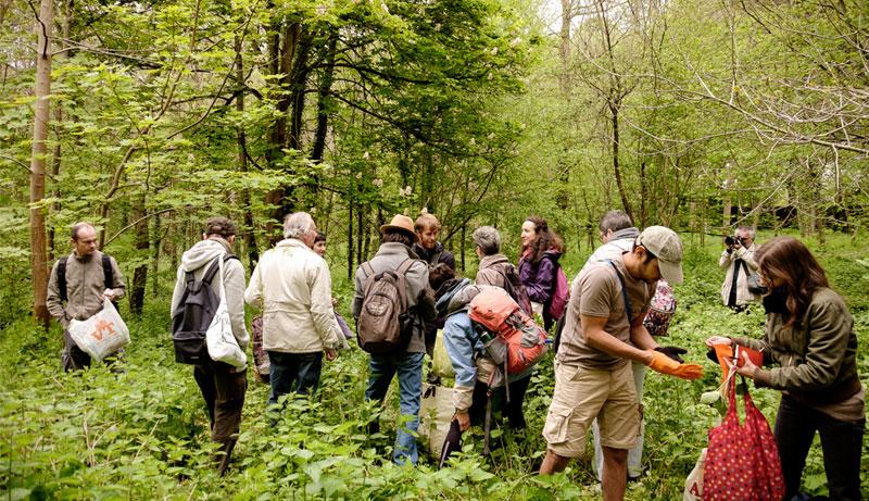 Cueillette dans les bois avec le Chemin de la nature / © Le Chemin de la nature