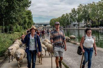 La Transhumance du Grand Paris, un festival itinérant du 6 au 17 juillet