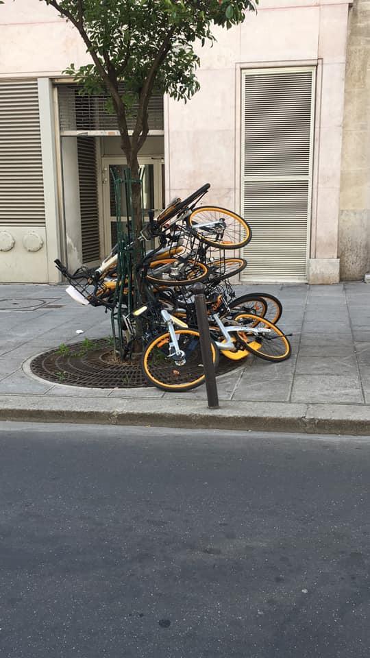 Arbre à vélo rue Dussoubs à Paris (2e) / © Valérian Beaudoin