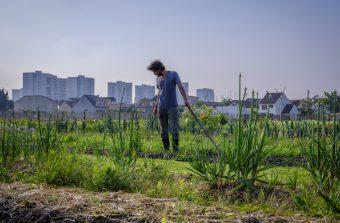 Capital agricole, l'expo qui explore l'agriculture francilienne