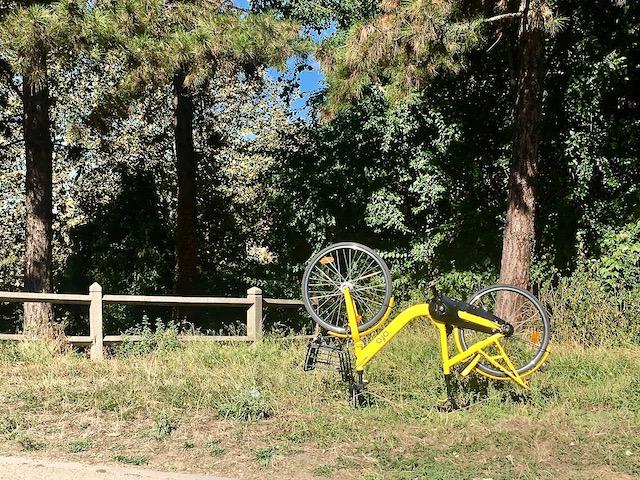 Vélo en libre-service dans le bois de Boulogne / © Steve Stillman pour Enlarge your Paris