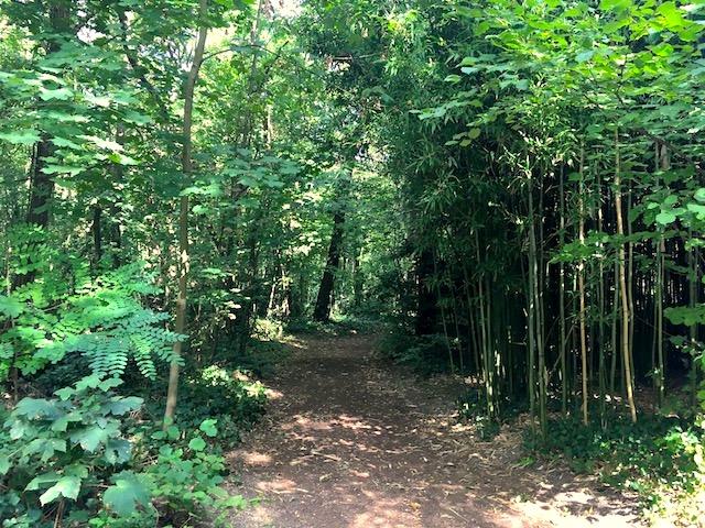 Le Jardin d'agronomie tropicale dans le bois de Vincennes / © Steve Stillman pour Enlarge your Paris