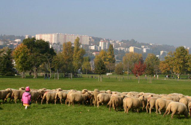 Le parc de Gerland à Lyon / © Agence Fabriques