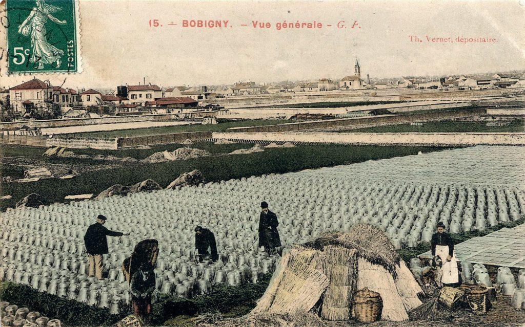 Un champ à Bobigny dans l'ancienne plaine des Vertus / DR
