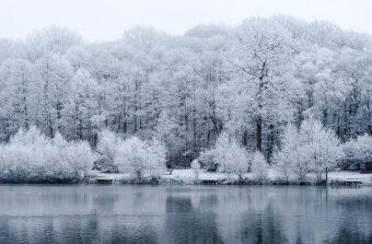 Jour blanc en forêt de Meudon, la forêt la plus proche de Paris
