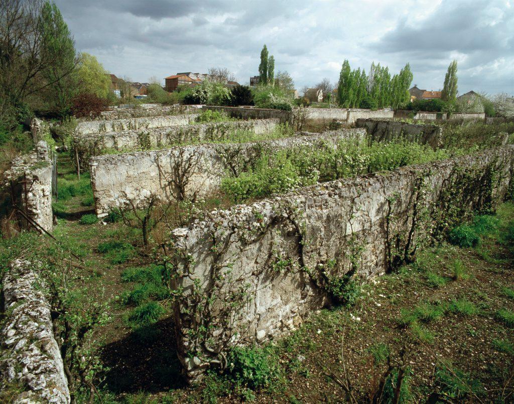 Les vestiges des murs à pêches à Montreuil / DR