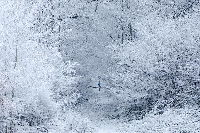 La forêt de Meudon / © Arseni Mourzenko (Creative commons - Flickr)