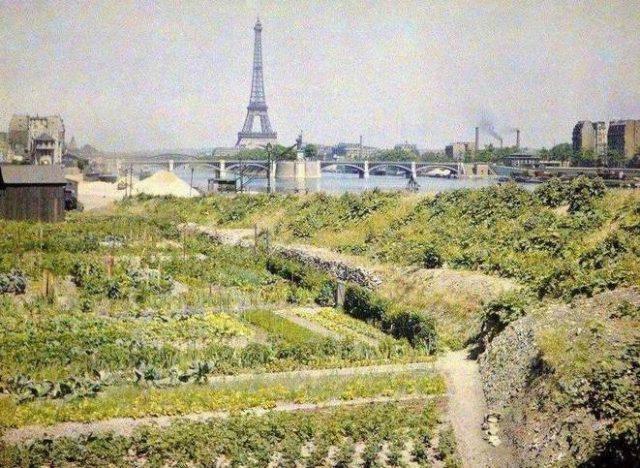 Jardins potagers, quai d'Auteuil (actuel quai Louis Blériot) en face le pont de Grenelle et la statue de la Liberté / © Musée Albert-Kahn