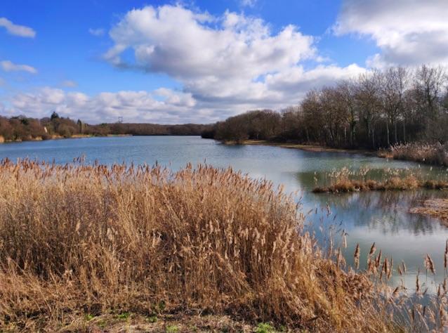 L'étang de la tour en forêt de Rambouillet /  © Helloways