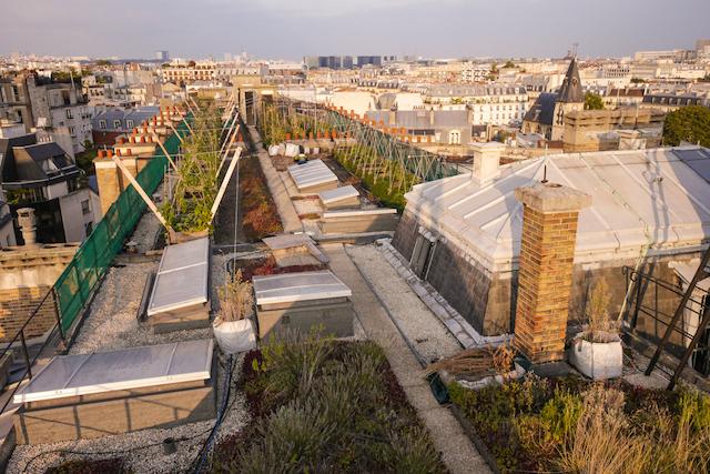 Le toit cultivé d'AgroParisTech dans le 5e arrondissement / © davidhaddad.com