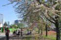 Un dimanche pour réfléchir à l'arbre en ville à Nanterre
