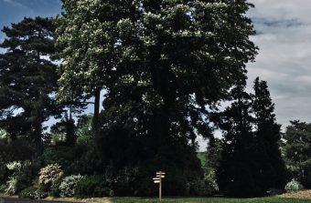 «La forêt devient un lieu de loisirs sous Napoléon III»