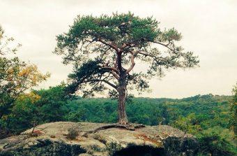 1789-2019, de la Déclaration des droits de l'Homme à celle de l'arbre
