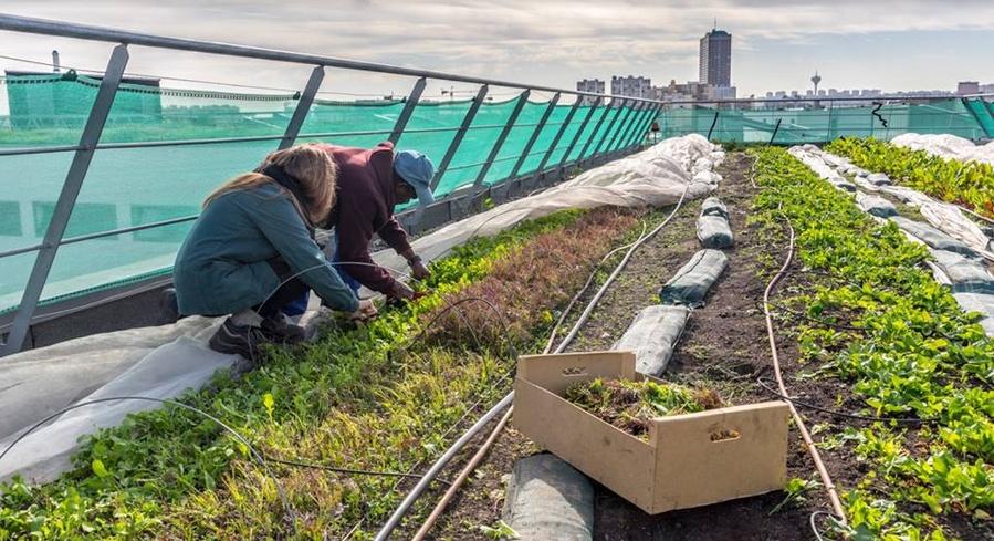 Culticime à Aubervilliers / © Association Espaces