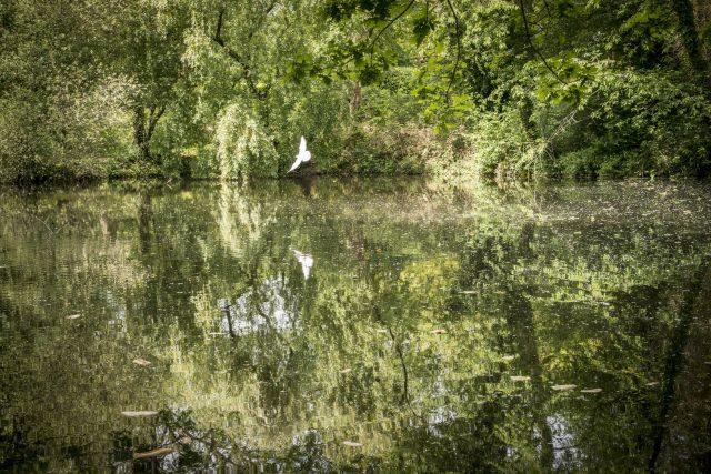 La réserve naturelle régionale du bassin de la Bièvre dans les Yvelines / © Jéromine Derigny pour Enlarge your Paris