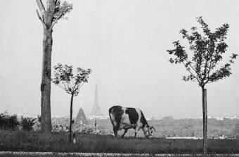 La France des années 30 dans l'oeil du photographe André Kertész