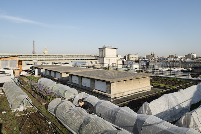 Potager sur le toit du Bon Marché, conçu et entretenu par Topager ; les herbes aromatiques, les fleurs comestibles et les salades sont destinées aux chefs du Restaurant La Table de la Grande Epicerie de Paris.
