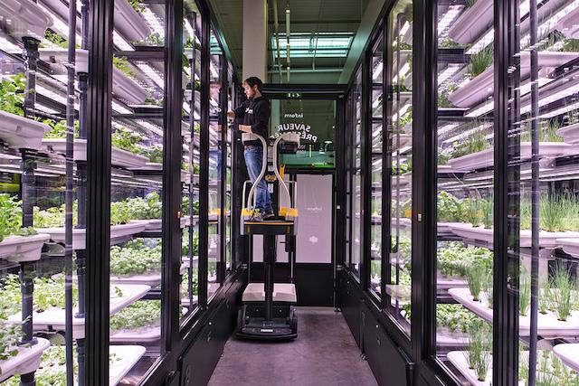 Potager vertical installé par METRO France et INFARM dans l'entrepôt METRO de Nanterre. Des herbes aromatiques y poussent toute l'année sans pesticides en culture hydroponique.  L'hydroponie est une technique de culture hors-sol, les racines des plants plongent dans une solution nutritive minérale.