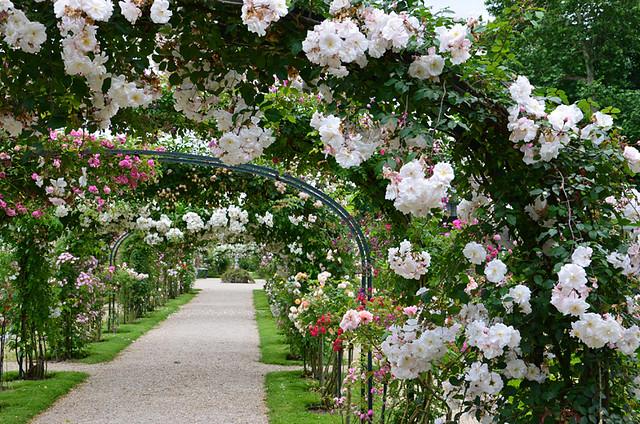 La Roseraie du Val-de-Marne à L'Haÿ-les-Roses / © Service photo du Département du Val-de-Marne (Creative commons - Flickr)