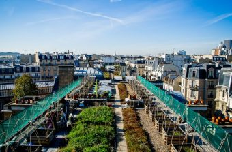 Six toits potagers au top dans le Grand Paris