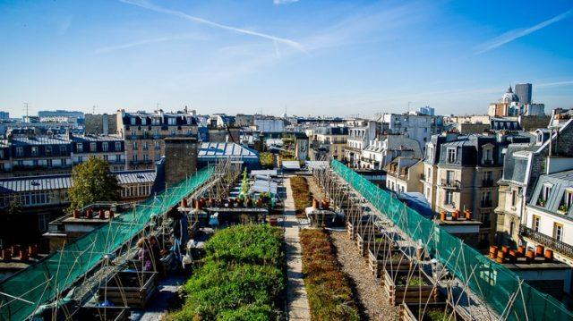 Le toit potager de l'école AgroParisTech à Paris / © Baptiste Grard