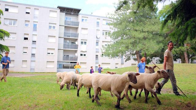 Les bergers urbains de Lyon / © La Bergerie Urbaine