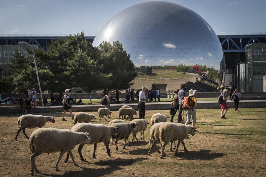 La Transhumance du Grand Paris à La Villette / © Jéromine Derigny - Collectif Argos