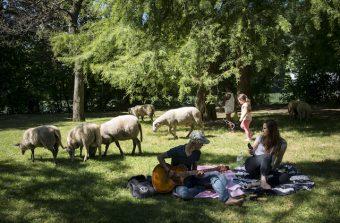 Déjeunez sur l'herbe au milieu des moutons au château de Versailles