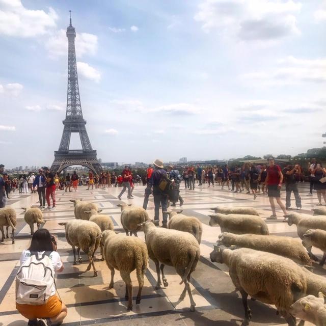 Arrivée de la Transhumance du Grand Paris sur le Trocadéro / © Steve Stillman pour Enlarge your Paris