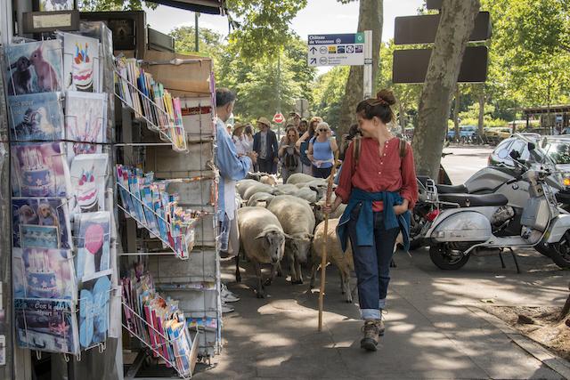 Le troupeau à Vincennes avec Marie-Anne Corniou, bergère à Marseille / © Jérômine Derigny