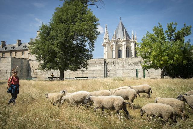 Les moutons au pied du château de Vincennes /  © Jérômine Derigny
