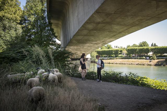 Les berges de la Marne sous un pont échangeur de l'A4 à Saint-Maurice / © Jérômine Derigny