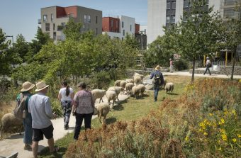 Tour d'horizon des initiatives d'agriculture urbaine dans le Grand Paris