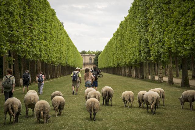 Le parc de Sceaux, allée du Pavillon de Hanovre / © Jérômine Derigny