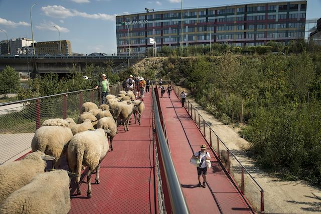 La passerelle entre Paris et le Millénaire à Aubervilliers, un quartier où les moutons des Bergers Urbains paissent toutes les semaines / © Jérômine Derigny
