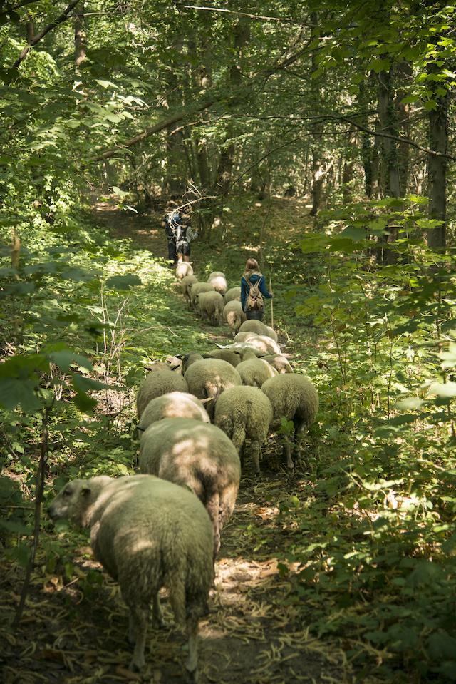 La forêt domaniale de Verrière-le-Buisson / © Jérômine Derigny