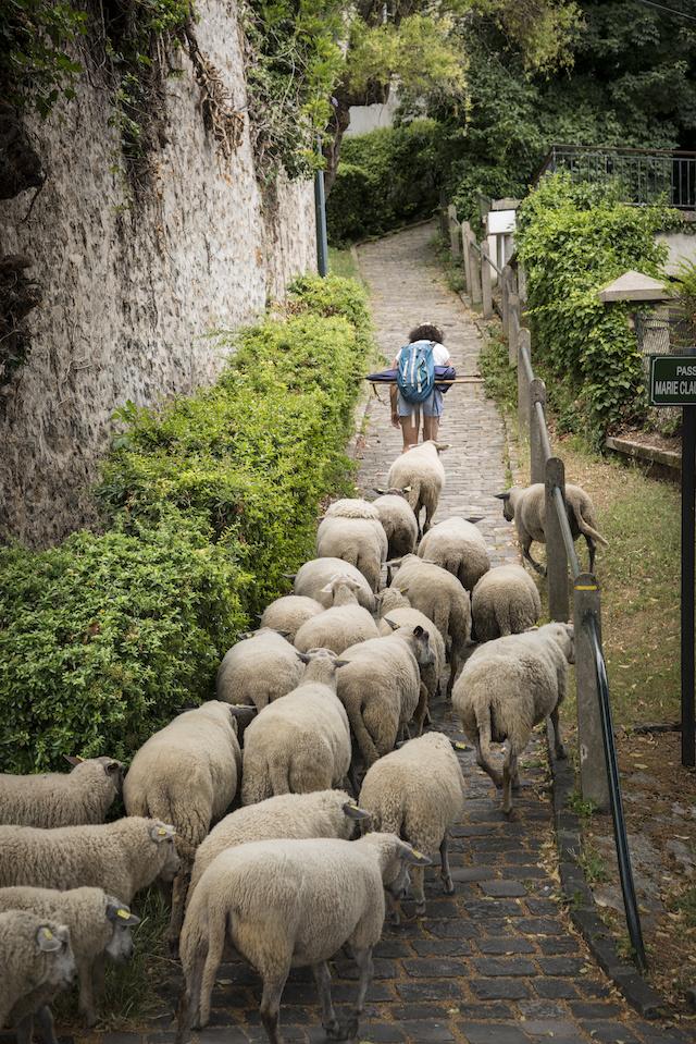 Le vieux Bièvres avec Julie Lou Dubreuil, co-fondatrice des Bergers Urbains / © Jérômine Derigny