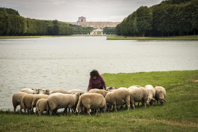 Le Grand Canal dans le parc du château de Versailles avec Julie Lou Dubreuil, co-fondatrice des Bergers Urbains / © Jérômine Derigny