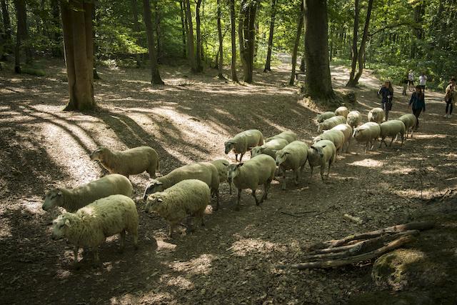 La forêt de Fausses Reposes à Ville-d'Avray / © Jérômine Derigny