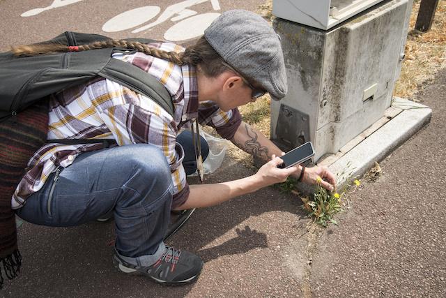 Nathalie Mondot, des Cueilleuses de paysages, analyse une plante pour constituer l'herbier de la Transhumance / © Jérômine Derigny