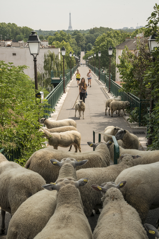 La passerelle de l'Avre à Saint-Cloud / © Jérômine Derigny
