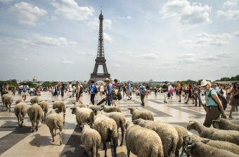 La Transhumance du Grand Paris vue par la photographe Jérômine Derigny