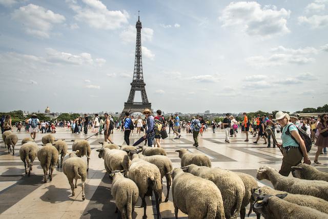 La parvis des Droits de l'Homme au Trocadéro / © Jérômine Derigny