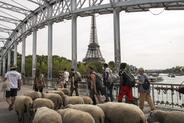 La passerelle Debilly à Paris 16e / © Jérômine Derigny