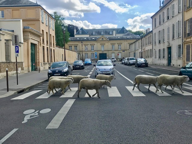 La Transhumance du Grand Paris à Versailles / © Steve Stillman pour Enlarge your Paris