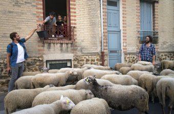 Des animaux de ferme en ville, pourquoi faire ?