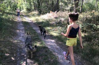 Avec la cani-rando, laissez-vous tirer en laisse en forêt de Fontainebleau