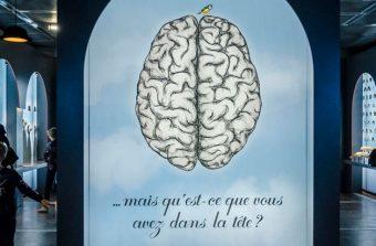 Une soirée pour comprendre votre cerveau à la Cité des sciences