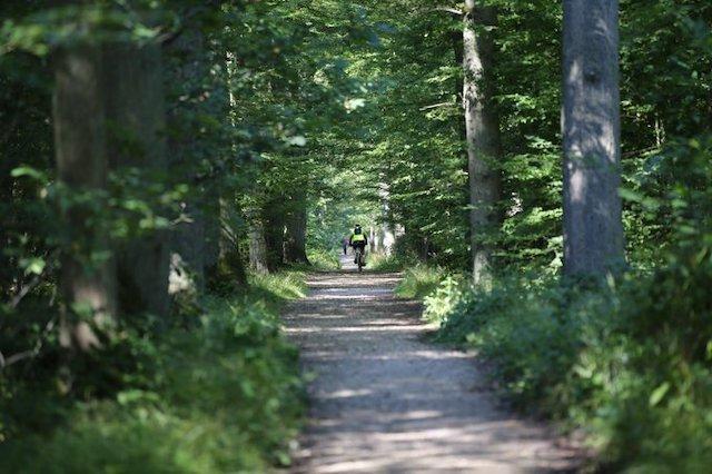 La forêt de Sainte-Apolline dans les Yvelines / © Conseil départemental des Yvelines