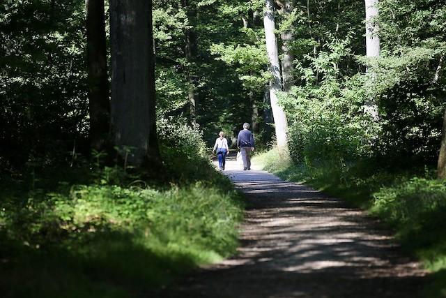 La forêt de Sainte-Apolline dans les Yvelines va connaître un chantier de reboisement jusqu'au printemps 2020 / © Nicolas Duprey - Conseil départemental des Yvelines